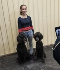 Isle of Standard Poodles – Striving to produce the best quality